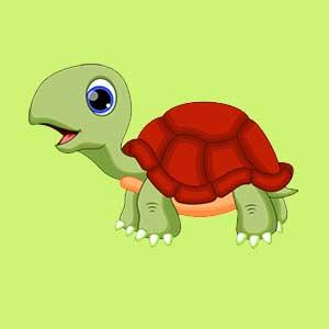 tortugues